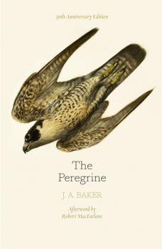 Читать The Peregrine: 50th Anniversary Edition - J. A. Baker